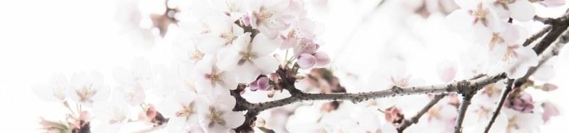 Våren, våren, våren